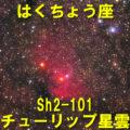 Sh2-101(チューリップ星雲)