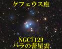 NGC7129(バラの蕾星雲)